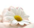 Рецепт крем для лица для сухой кожи